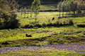 A frolic horse in cropland there is national minority which called yizu sichuan province of china they have lived daliangshan area Royalty Free Stock Photography