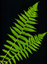 Fronds Stock Photography