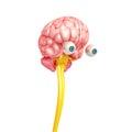 Página de cerebro