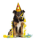 Front view of a border collie partying sitting looking at the camera isolated on white Stock Photography