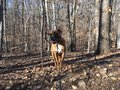 Front view of Boxer dog in Rock creek park in winter Royalty Free Stock Photo
