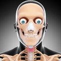 Front view of human head skeleton d art illustration Stock Photo