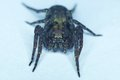 Front view of spider Royalty Free Stock Photo