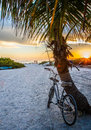 Bike and palm tree at Crescent Beach Royalty Free Stock Photo