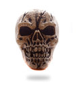Frontal View Human Skull Royalty Free Stock Images