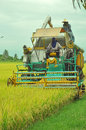 Frontview of rice harvesting machine Royalty Free Stock Photo