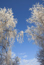 Frost and blue sky Royalty Free Stock Photography
