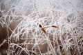 Frost closeup of a grass covered with Stock Photography