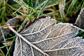 Frost-covered leaf Royalty Free Stock Image