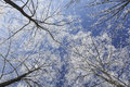 Frost covered trees, profiled on bright sky in winter Royalty Free Stock Photo
