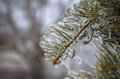 Frost on pine frozen branch of a tree ontario canada winter time Royalty Free Stock Photos