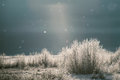 Frost sun and snow hoar on bushes in alaska in winter with light bokeh from falling Royalty Free Stock Images