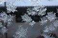 Frost In Window