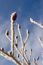 Frosted branches on plant Royalty Free Stock Photo