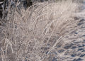 Frosted grass twinkling in sunlight Royalty Free Stock Images