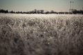 Frosted grass in the winter Royalty Free Stock Photography