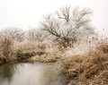 Frosted trees at the river Paar Royalty Free Stock Photo