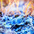 Frosty foliage Royalty Free Stock Photos