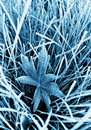 Frosty grass and leaf Royalty Free Stock Photography