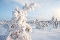 Frosty Royalty Free Stock Photo