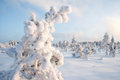 Frosty kõrvemaa bog estonia europe Royalty Free Stock Images