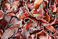 Frosty leaves background Stock Photography