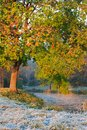 Frosty morning in early autumn on the lake Royalty Free Stock Images