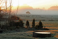 Frosty morning on farm Royalty Free Stock Image