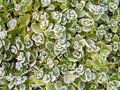 Frosty november morning Royalty Free Stock Photo