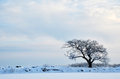 Frosty oak Royalty Free Stock Photography