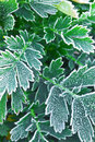 Frosty plants in late fall Royalty Free Stock Images