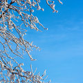 Frosty tree and blue sky Stock Images