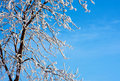 Frosty tree and blue sky Royalty Free Stock Photos