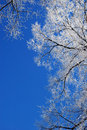 Frosty tree-tops Stock Photography