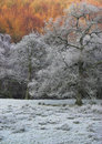 Frosty trees Royalty Free Stock Photo