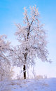 Frosty Trees at Winter morning Royalty Free Stock Photography