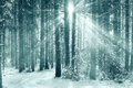 Frosty winter landscape in snowy forest Royalty Free Stock Images