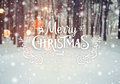 Frosty winter landscape in snowy forest. Christmas background with fir trees and blurred background of winter with text Royalty Free Stock Photo