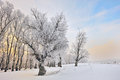 Frosty winter trees Royalty Free Stock Photo