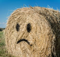 Frown straw bales with blue sky Stock Photo
