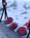 Frozen apples in snow red left to freeze outside the frost and Royalty Free Stock Images
