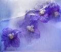 Frozen    Blue Delphinium Flower
