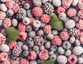 Frozen berries background assorted and leaves Royalty Free Stock Images