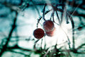 Frozen berries with ice crystals Stock Photos