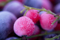 Frozen berries macro view of blackcurrant redcurrant blueberry Stock Photos