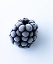 Frozen blackberry Stock Photos