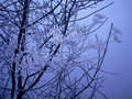 Frozen branch Royalty Free Stock Image