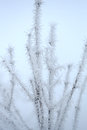 Frozen Branch Stock Images