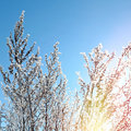 Frozen branch on the blue sky background Stock Photo