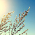 Frozen branch toned photo of on the blue sky background Royalty Free Stock Image